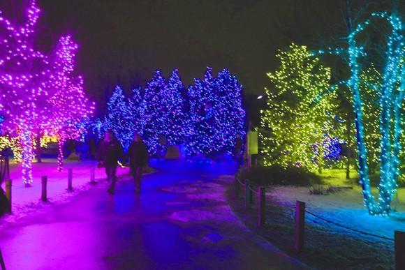 Kick Starting 2011 with Last Call for the Lights at the Toledo Zoo
