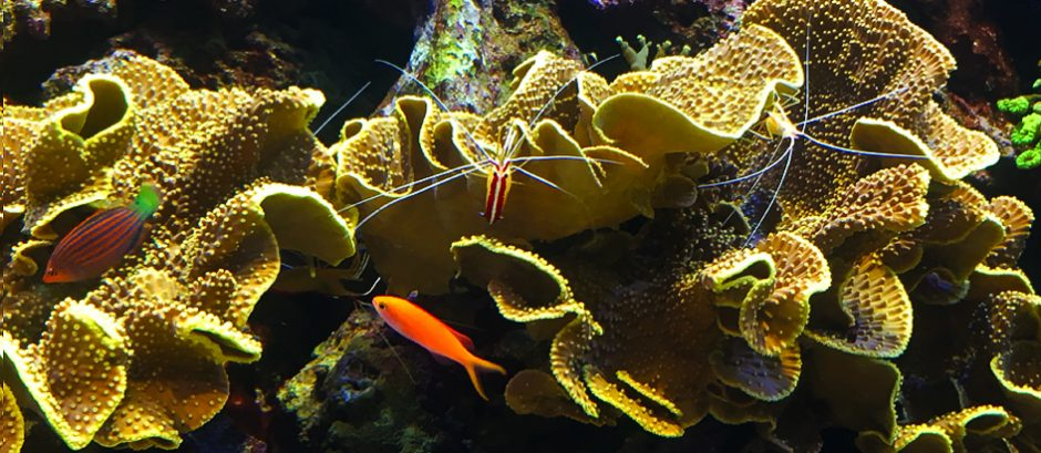 Live coral reef at the Toledo Zoo